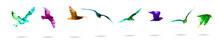 Set Of Quarel Seagulls. Mixed Media. Vector Illustration