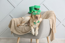 Cute Dog With Green Hat On Arm...