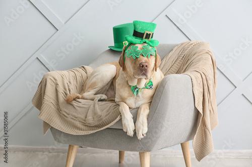 Cute dog with green hat on armchair Fototapeta