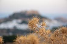 Macro-photo Of Dried Bur. Clos...