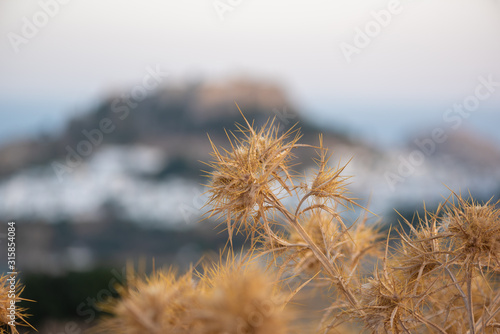 Obraz na plátně Macro-photo of dried bur