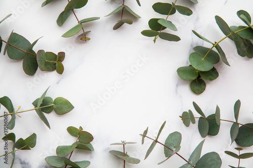 Obraz Frame of eucalyptus leaves on a marble background. Lay flat - fototapety do salonu