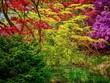canvas print picture Autumn Garden Trees