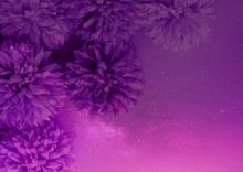 Beautiful Abstract Color Purple And Pink Flowers On Lightning Background And White Flower Frame And Purple Leaves Texture, White Background, Colorful Flowers Banner Happy Valentine