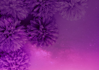 Beautiful abstract color purple and pink flowers on lightning background and ...