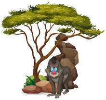 Isolated Picture Of Baboon Und...