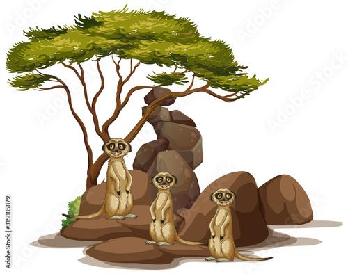 Isolated picture of meerkats on the rock Fototapeta