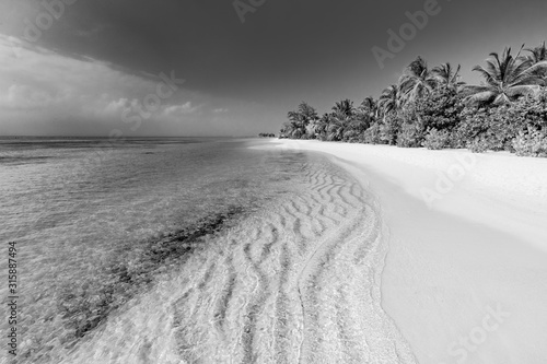 Obraz na plátně  Artistic black and white concept of tropical scenery with palm soft sunset sunlight, bright dramatic nature with copy space