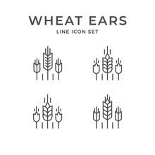 Set Line Icons Of Wheat Ears