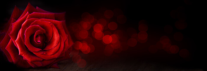 Abstract flower banner with red rose on black background, bokeh lights - Valentines, Mothers day, anniversary concept