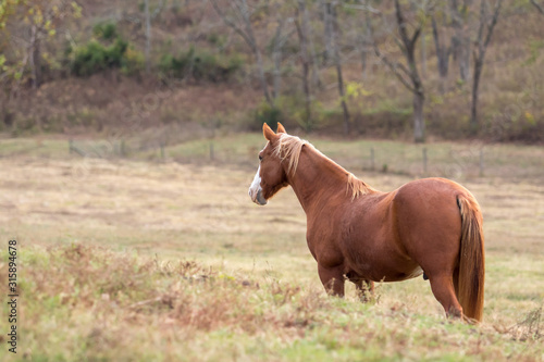 Side View of Palomino Horse Looking