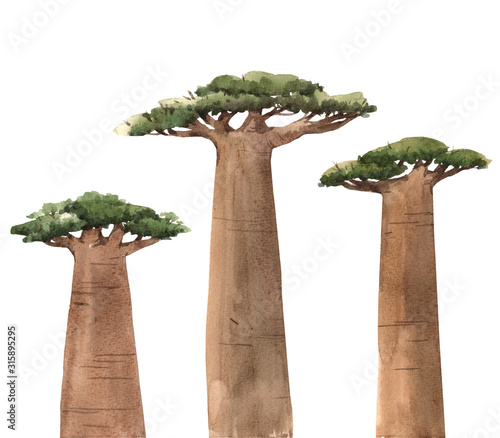 Photo Watercolor baobab adansonia african tree illustrations