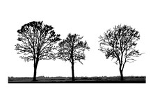 Tree Silhouettes Isolated On White Background. Realistic Set Of Trees Silhouette And Grass, Black Shape. Outline Large Dried Trees With Bare Branches Without Leaves. Winter Scenery. Stock Vector