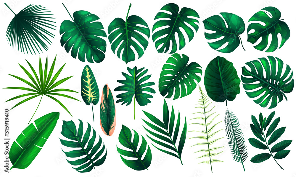 Fototapeta Vector realistic illustration set of tropical leaves and flowers isolated on white background. Highly detailed colorful plant collection. Botanical elements for cosmetics, spa, beauty care products
