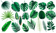 Leinwanddruck Bild - Vector realistic illustration set of tropical leaves and flowers isolated on white background. Highly detailed colorful plant collection. Botanical elements for cosmetics, spa, beauty care products