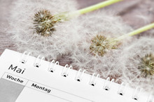 Calendar With Dandelion Pollen And German: May, Week, Monday