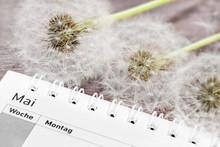 Calendar With Dandelion Pollen...