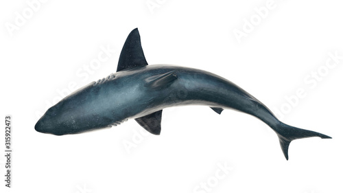 Great white shark isolated on white background cutout ready view from top  3d re Tableau sur Toile