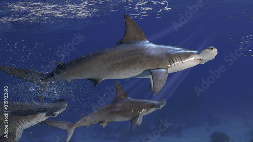 Obraz 3 hammerhead sharks targeting the school of prey fish 3d rendering - fototapety do salonu