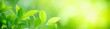 canvas print picture - Closeup nature view of green leaf on blurred greenery background in garden with copy space for text using as summer background natural green plants landscape, ecology, fresh cover page concept.
