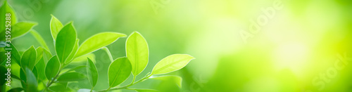 Obraz Closeup nature view of green leaf on blurred greenery background in garden with copy space for text using as summer background natural green plants landscape, ecology, fresh cover page concept. - fototapety do salonu