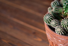 Cactus Background Table Brown ...