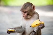 Monkeys In Kathmandu