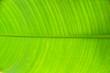 Leinwandbild Motiv Closeup Of Green Banana Leaf Texture Abstract Background