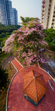 Singapore Sep 17/2019 Morning At Block 18 HDB Telok Blangah - Aerial Shot Of Trumpet Trees Bursting Into Full Bloom