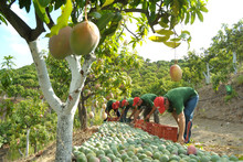 Agricultural Workers Packing M...