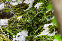 Zaitsev Rocks In The Rostov Region In Krasnosulinsky District, Stone Natural Structures Of Large Size, Green And Damp Mosses Among The Vegetation, Unusual Species For Walking.
