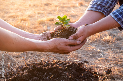 Fototapeta Young men join hands together to plant trees on fertile ground. The concept of protecting nature obraz na płótnie