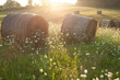 canvas print picture - hay rollers. grass. field harvesting