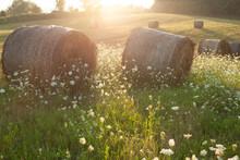 Hay Rollers. Grass. Field Harv...