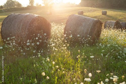 Fotografia hay rollers. grass. field harvesting
