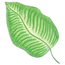 Hand Drawn Green Illustration ...