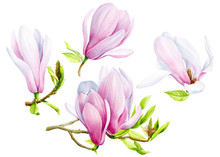 Set Of Magnolia Flowers On An ...