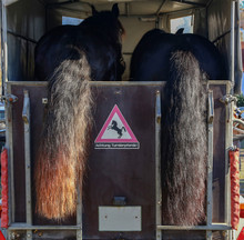 Horse Trailer And Two Horses R...