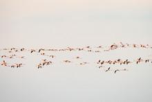Flock Of Birds Flying In The B...