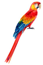 Tropical Bird, Macaw Parrot On...