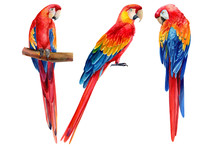 Set Of Parrots On An Isolated ...
