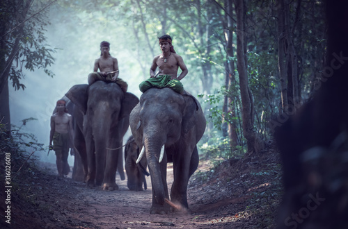 Asian Elephants in Thailand Wallpaper Mural
