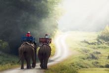 Elephant Trekking Through Jung...