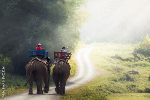 Photo  Elephant trekking through jungle in northern Laos