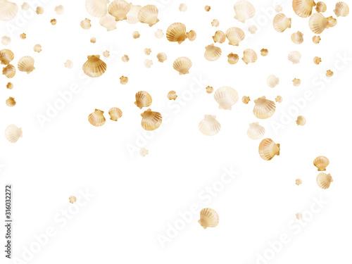 Gold seashells isolated, pearl bivalved mollusks Fototapeta