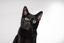 Close Up Of Black Domestic House Cat Wide Green Eyed Long Whiskers On Solid Background