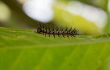A Little Caterpillar Possed In...