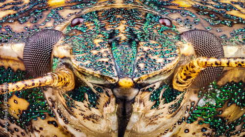 Frontal view of a Stink Bug head detailing the eyes and the pit like structure of the exoskeleton through a microscope at x10 magnification Canvas-taulu