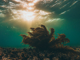 coral underwater with sunset