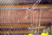Spider Web In The Sun.